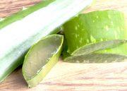 L'Aloe Vera, une plante miraculeuse à découvrir de toute urgence!