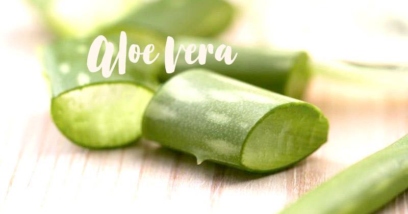 L'aloe vera, votre indispensable pour un été au naturel
