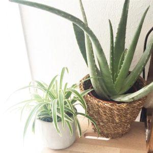 Welcome home ! urbanjungle plant aloevera urbanjungleblogger