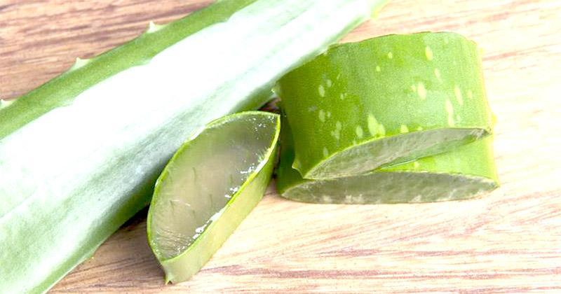 Aloe Vera : une plante miraculeuse à découvrir de toute urgence!