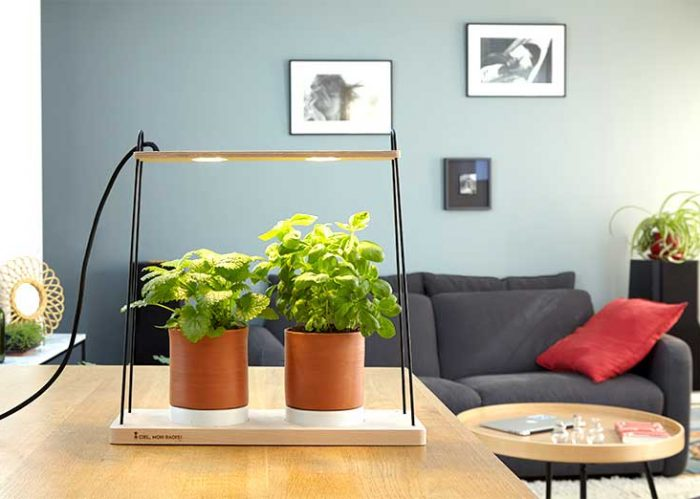 Jean Racine, le potager pout jardiner dans la maison ou au salon